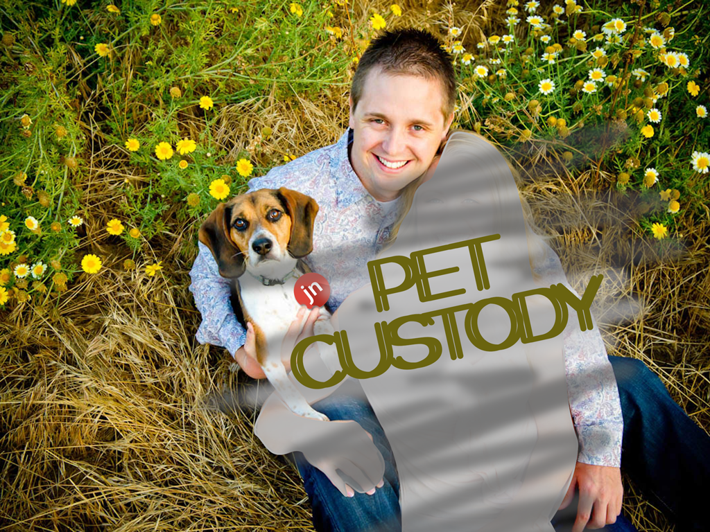 Pet Custody: A Doggy Tail