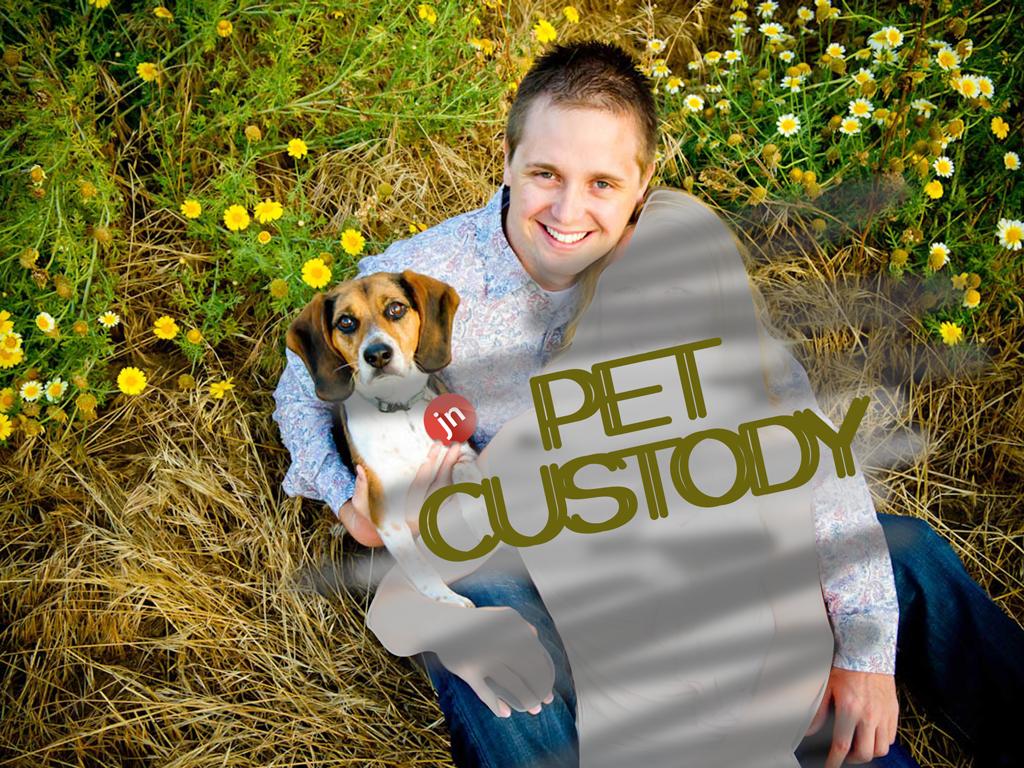 Pet Custody: A Doggy Tail